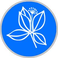 Buche — Keltisches Baumhoroskop