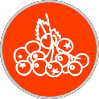 Keltisches Baumhoroskop Eberesche