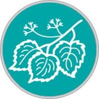 Keltisches Baumhoroskop Linde