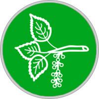 Keltisches Baumhoroskop Pappel