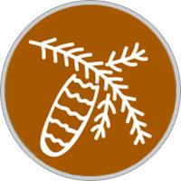 Keltisches Baumhoroskop Tanne
