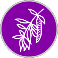 Keltisches Baumhoroskop Weide