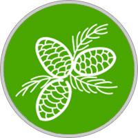 Keltisches Baumhoroskop Zeder