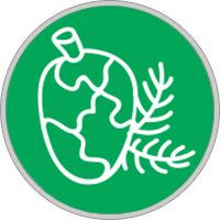 Keltisches Baumhoroskop Zypresse